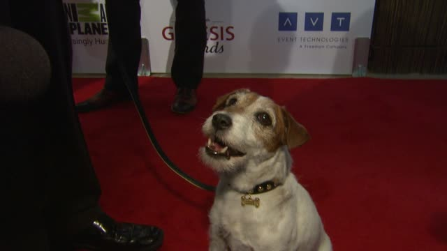 Uggie at The 26th Annual Genesis Awards Presented By The Humane Society Of The United States on 3/24/12 in Los Angeles CA