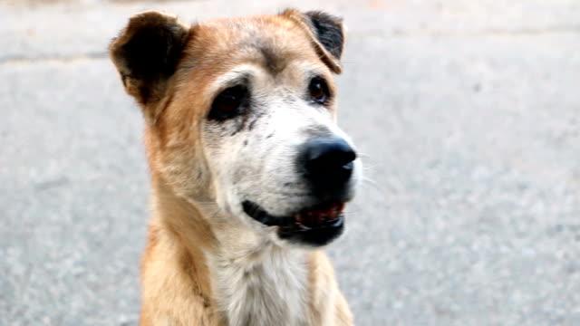 Ugly brown dog