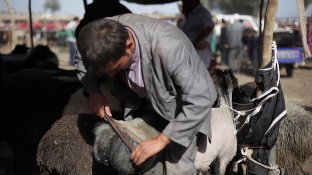 uighur muslim trims hair from animal at livestock market - livestock stock videos & royalty-free footage