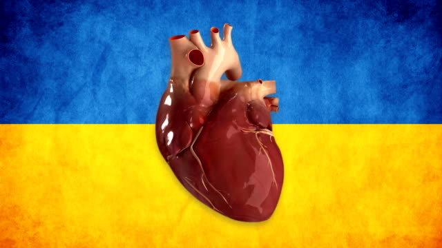 ukraine heart - human heart stock videos & royalty-free footage