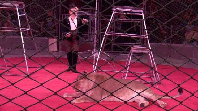 vídeos y material grabado en eventos de stock de ukrainian circus artists perform with tigers during presentation of a new circus show in the fantasy steampunk style called 'pendulum of time' in the... - felino grande