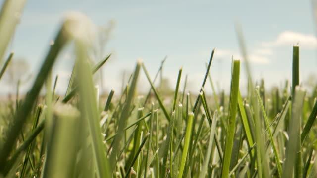 明るい晴れた日に夏に草の前や裏庭の緑のブレードのハンドヘルドショットを移動する超低角度マクロアーツ - ローアングル点の映像素材/bロール