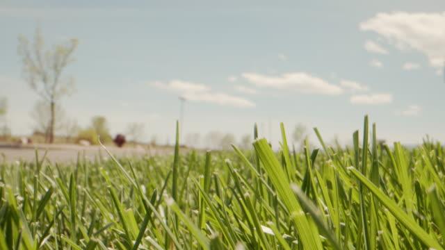 明るい晴れた日に夏に草の前や裏庭の緑のブレードのハンドヘルドショットを移動する超低角度マクロアーツ - 草原点の映像素材/bロール