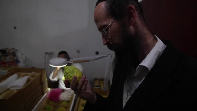ultra orthodox jews are preparing for sukkot or feast of the tabernacles with the four species market ritual when they choose the perfect branches of... - torah stock videos and b-roll footage