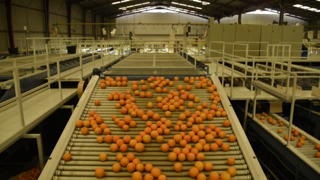 stockvideo's en b-roll-footage met ultraviolet lights are used during quality control at the packing plant operated by antonio llusar y cia, s.a. in chilches, spain, on monday, feb 6... - plant stage