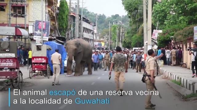 un elefante causo gran revuelo en las calles de una ciudad de india al pasearse a sus anchas en medio de los coches y de una multitud de curiosos que... - multitud stock videos & royalty-free footage