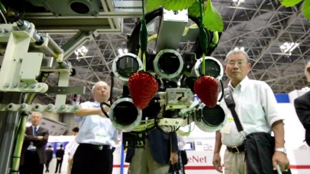 un fabricante japones de sistemas automatizados de seleccion de fruta presento este miercoles un robot recolector de fresas noctambulo y capaz de... - fruta stock videos & royalty-free footage