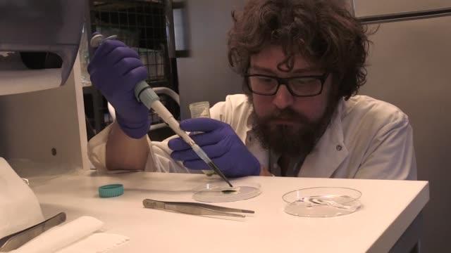 un grupo de cientificos chilenos desarrollo piel fotosintetica que produce oxigeno para la regeneracion de tejidos utiles en los tratamientos de... - ulcer stock videos & royalty-free footage