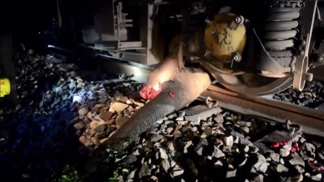 un tren descarrilo el lunes en una reserva de vida silvestre luego de impactar contra una elefanta en el este de india - reserva animal stock videos and b-roll footage