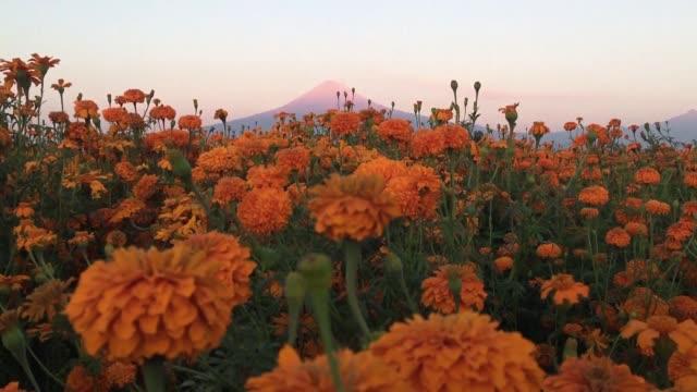 Una marea de flores de cempasuchil color naranja esta lista para guiar a las almas hasta Mexico en Dia de Muertos segun el misticismo de tiempos...