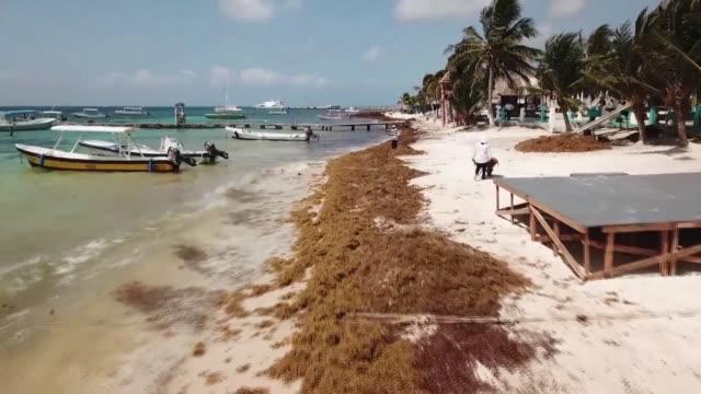 Una nueva ola de sargazo un alga parda se apodera de las playas de la Peninsula de Yucatan al sureste de Mexico una fuente de preocupacion entre los...