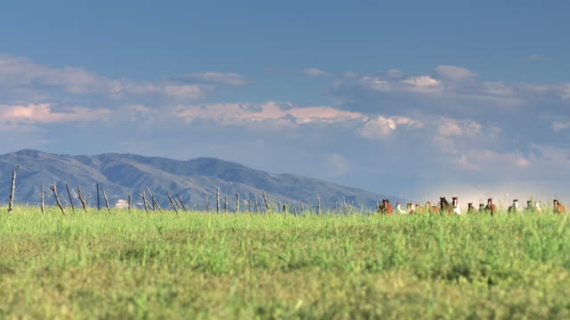 unbroken horses running towards camera - recreational horse riding stock videos & royalty-free footage