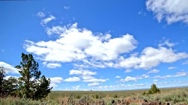 under blue sky and puffy clouds in the desert with sagebrush south steens mountain near malheur national wildlife refuge 2 - oregon us state stock videos & royalty-free footage