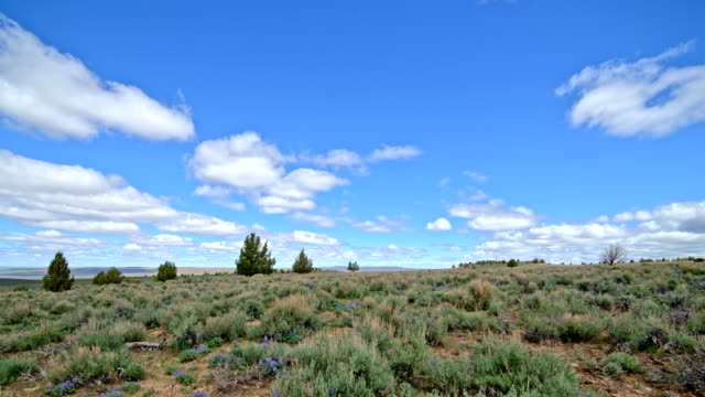 Under blue sky and puffy clouds in the desert with sagebrush South Steens Mountain near Malheur National Wildlife Refuge