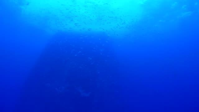 under sea pinnacle with school of fish - mountain ridge stock videos & royalty-free footage