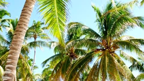 vídeos y material grabado en eventos de stock de debajo de los árboles de coco - árbol tropical