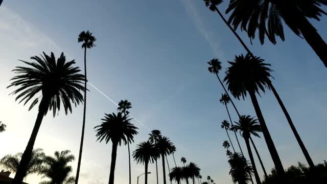 unter den palmen - von bäumen gesäumt stock-videos und b-roll-filmmaterial