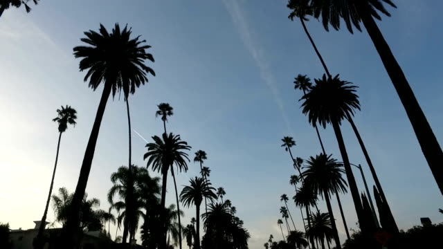 under the palm trees - palm tree stock videos & royalty-free footage