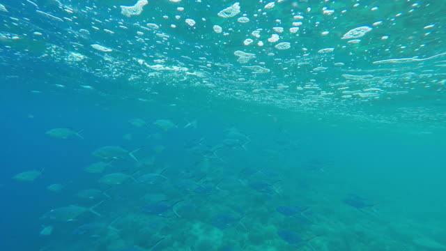 under the sea, school of fish - tahaa island stock videos & royalty-free footage