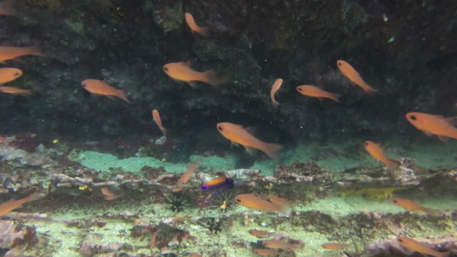 under the sea - aquatic organism stock videos & royalty-free footage
