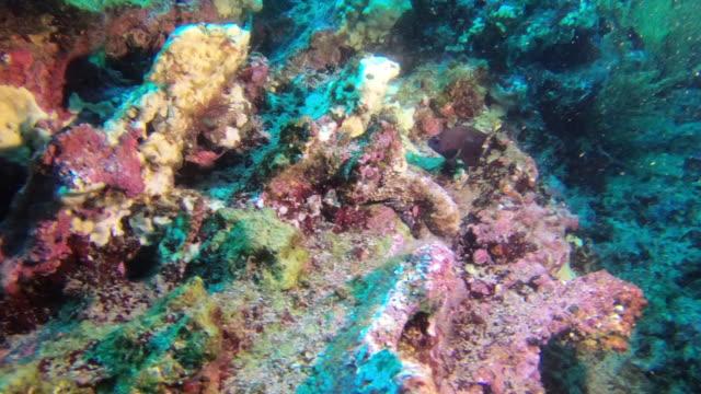 海の下 - エンゼルフィッシュ点の映像素材/bロール