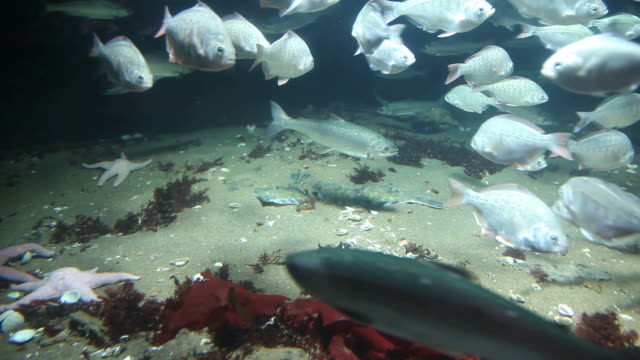 under the sea - flounder stock videos & royalty-free footage