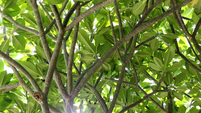 under the tropical tree in the public park and sunlight shining. - tropical tree stock videos & royalty-free footage