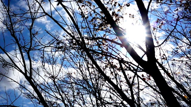 under tree movement with blue sky - good posture stock videos & royalty-free footage