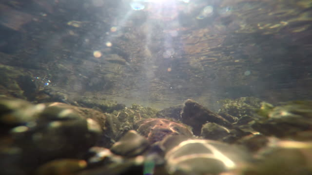 under water at stream - riverbed stock videos & royalty-free footage