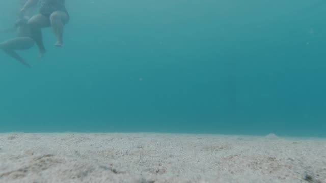 under water landscape with swimmers - aquatic organism stock videos & royalty-free footage
