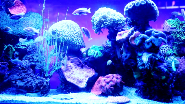 under water. - fish tank stock videos & royalty-free footage