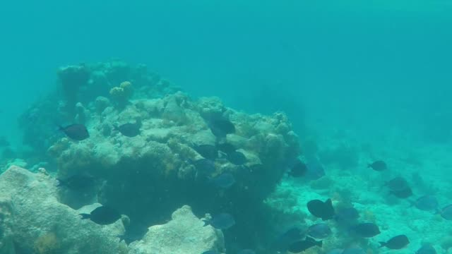 vidéos et rushes de underneath the water on a coral reef 3 - bahamas