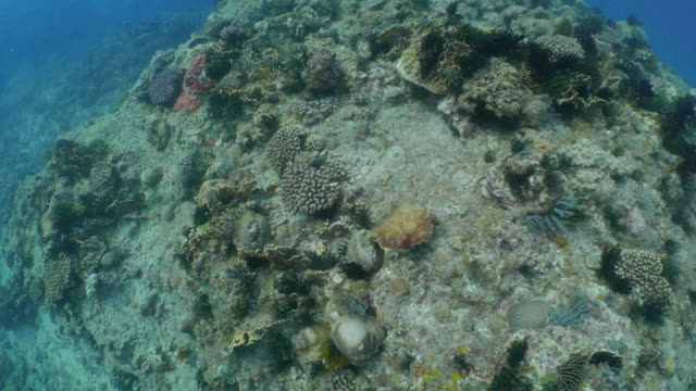 Undersea aerial coral reef floor