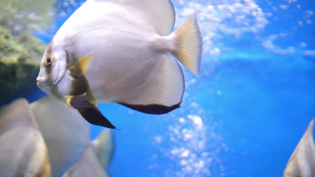 undersea and fish - saltwater fish stock videos & royalty-free footage