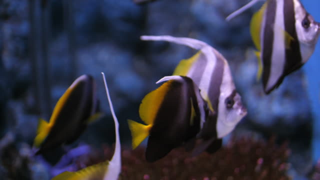 undersea and fish - reef stock videos and b-roll footage