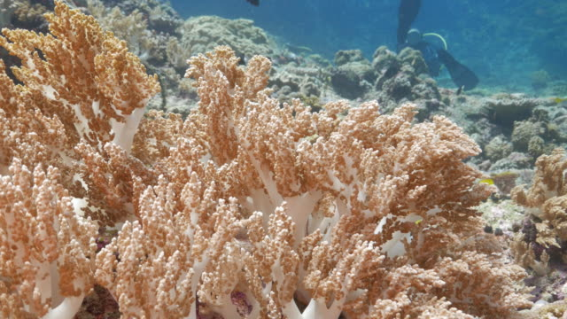 undersea beautiful soft coral - soft coral stock videos & royalty-free footage