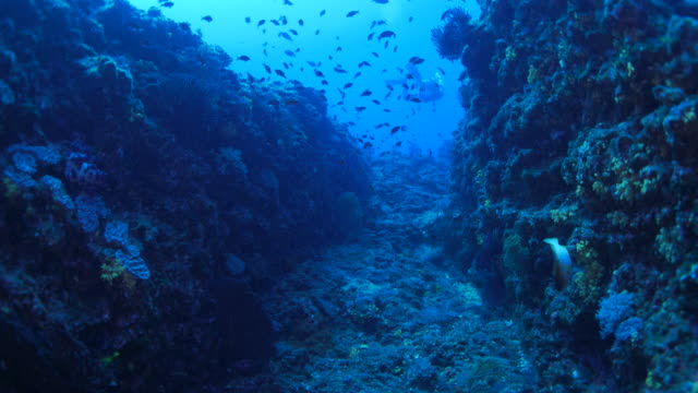 Undersea canyon with fish and coral