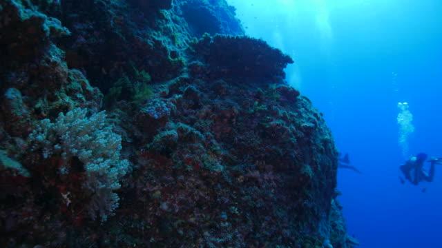 Onderzeese klif met harde koraal, Japan