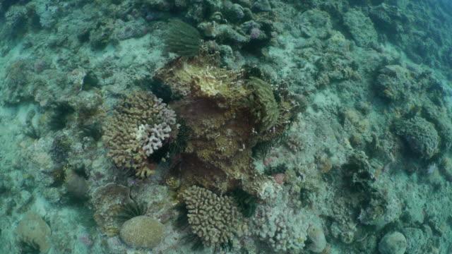 Undersea coral reef, aerial view