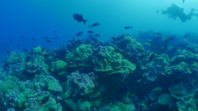 vidéos et rushes de barrière de corail sous-marin à l'île darwin, galapagos - îles galapagos