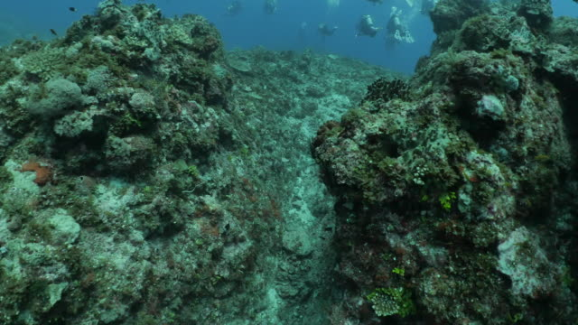 undersea coral reef at orchid island, taiwan - philippine sea stock videos & royalty-free footage