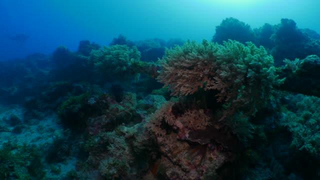 Undersea coral reef in deep blue water