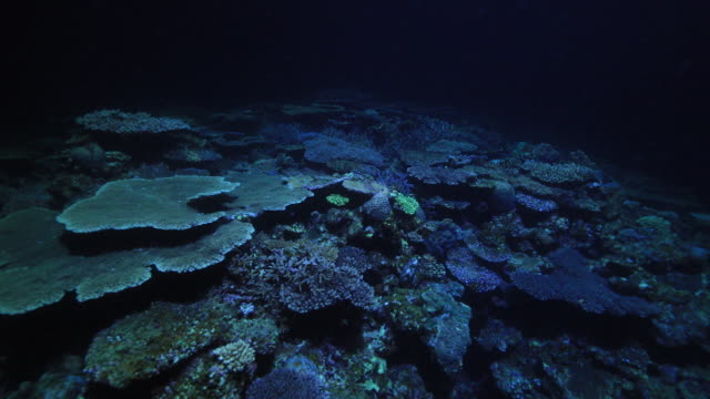 undersea coral reef in okinawa - undersea stock videos & royalty-free footage