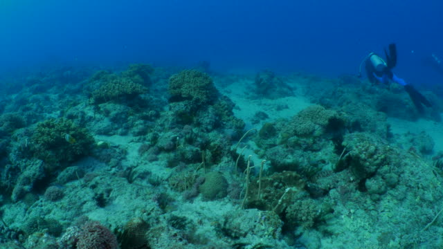 Undersea coral reef in strong current