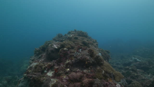 Undersea coral reef in subtropical area