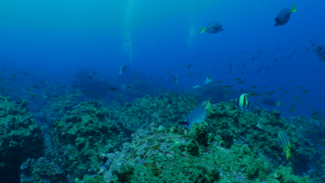 ウルフ島、ガラパゴスの海底のサンゴ礁 - チャールズ・ダーウィン点の映像素材/bロール