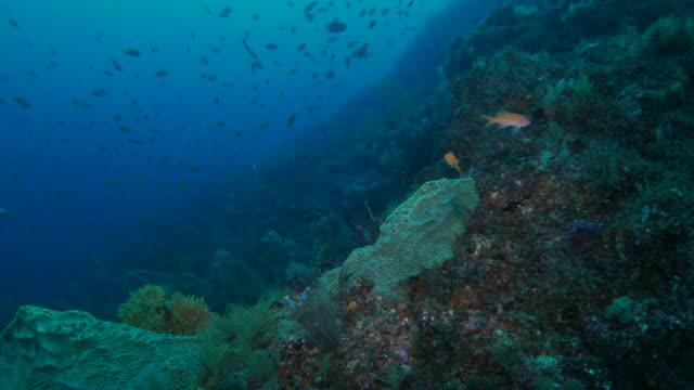 vídeos de stock, filmes e b-roll de submarino de recifes de corais, japão - reserva animal