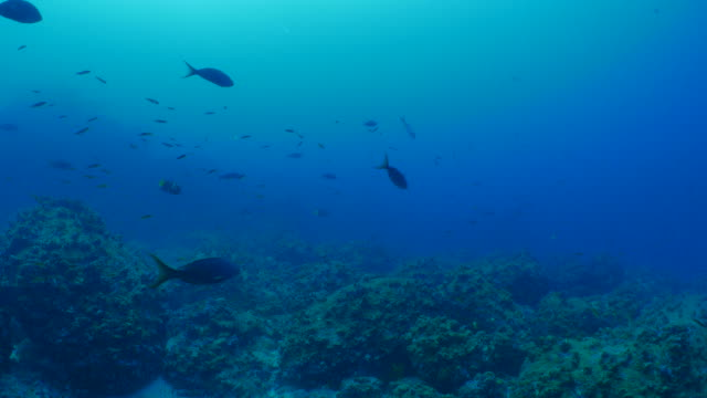 Undersea coral reef of Wolf Island, Galapagos