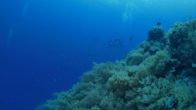 Onderzeese koraalrif, Palau