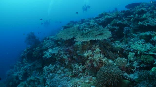 vídeos y material grabado en eventos de stock de arrecife de coral submarino, palau - protección de fauna salvaje